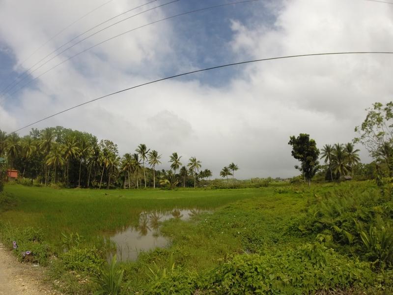 BOHOL : Quelques rizières / Philippines : 3 jours à BOHOL / www.by-laura.fr