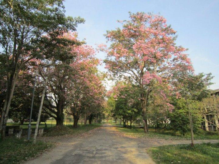 flowering peradeniya university