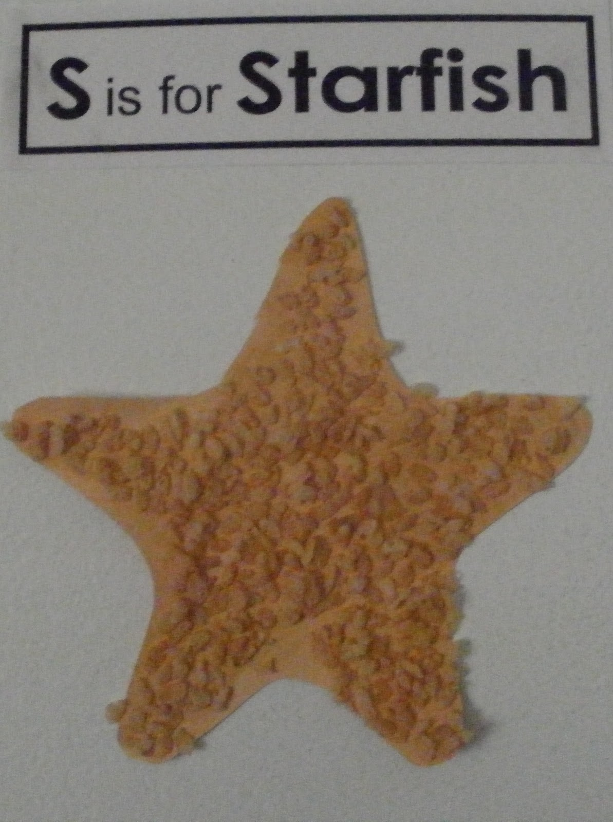starfish craft ideas learning starfish texture craft w template 3002