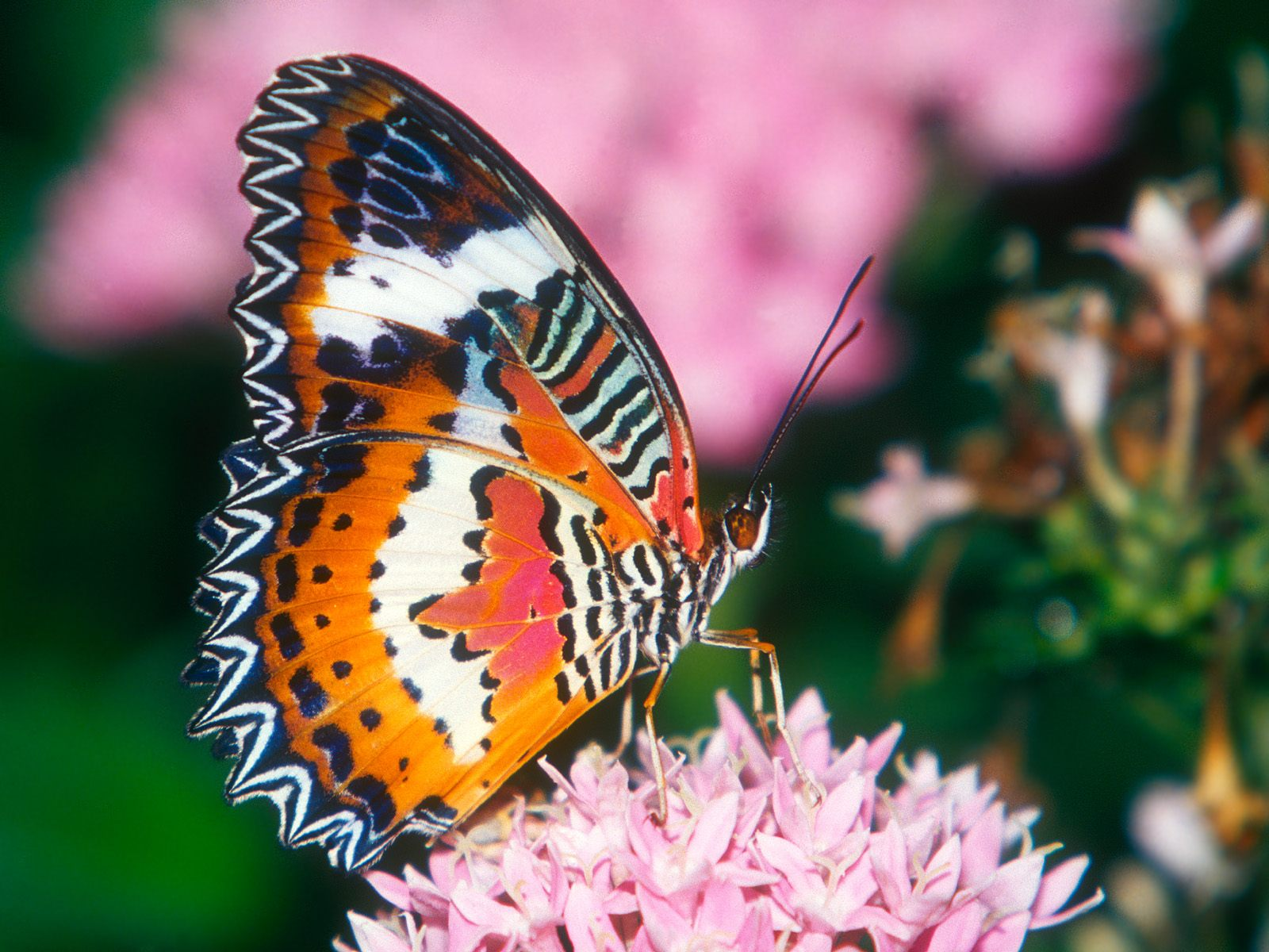 butterfly background - photo #47