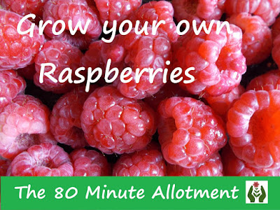 Grow your own raspberries The 80 Minute Allotment Green Fingered Blog