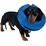 October Deals, Buster Inflatable Collar, Medium £6.65 Pre order,stock oct 27, 2016