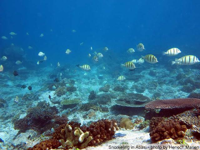 Ikan striped surgeonfish dan terumbu karang di Papua Barat