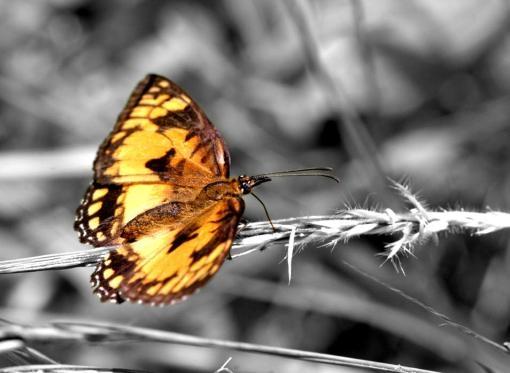 Papic Schwarz Weiß Fotos Mit Gelbem Farbeffekt
