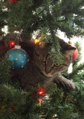 chat marrant dans un sapin de noel 2017