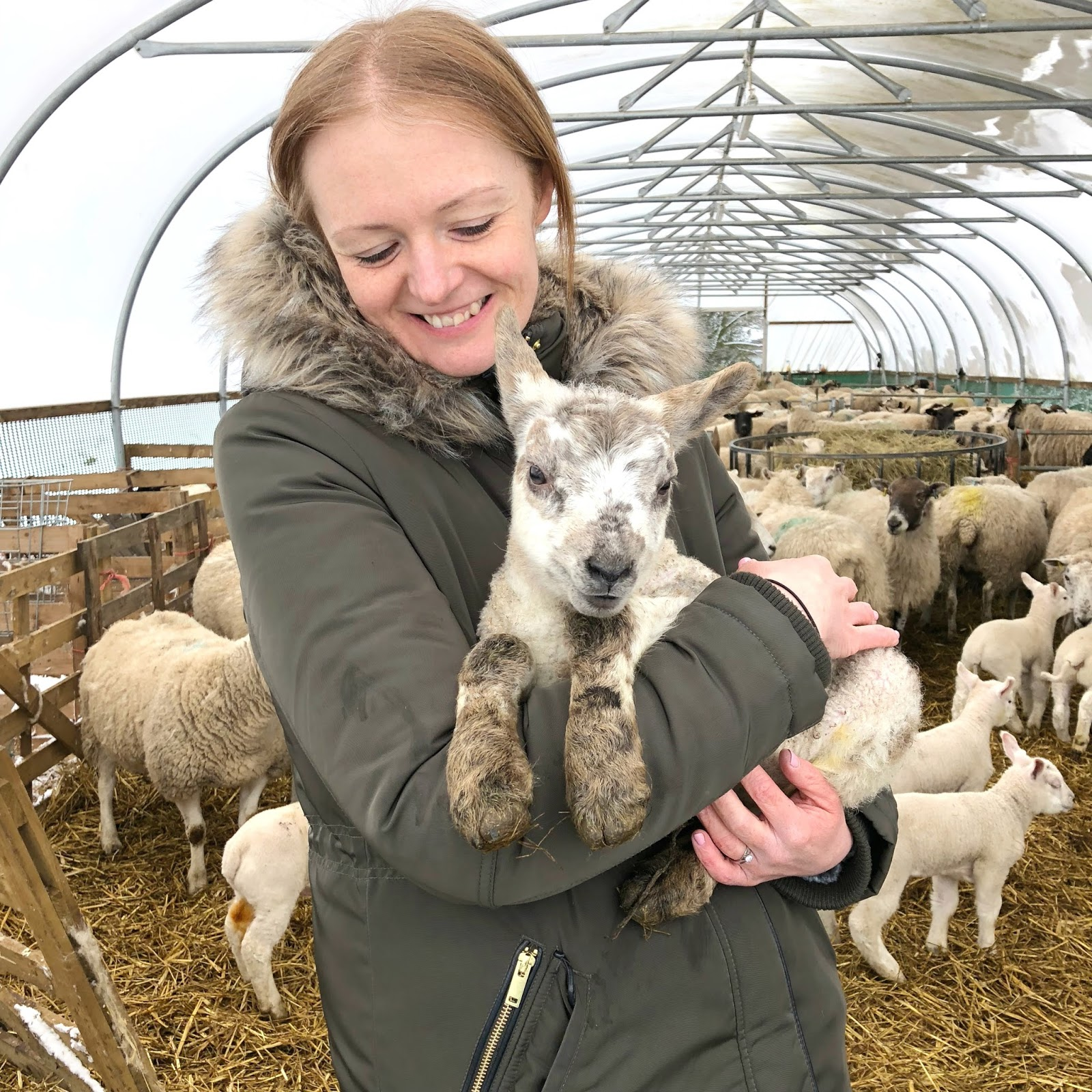 St Oswald's Farm Hexham - Lambs