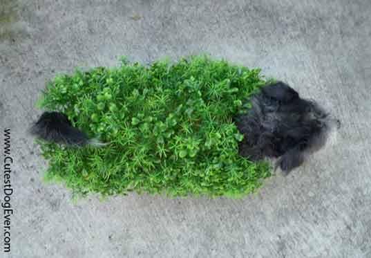 dog dressed as chia pet halloween