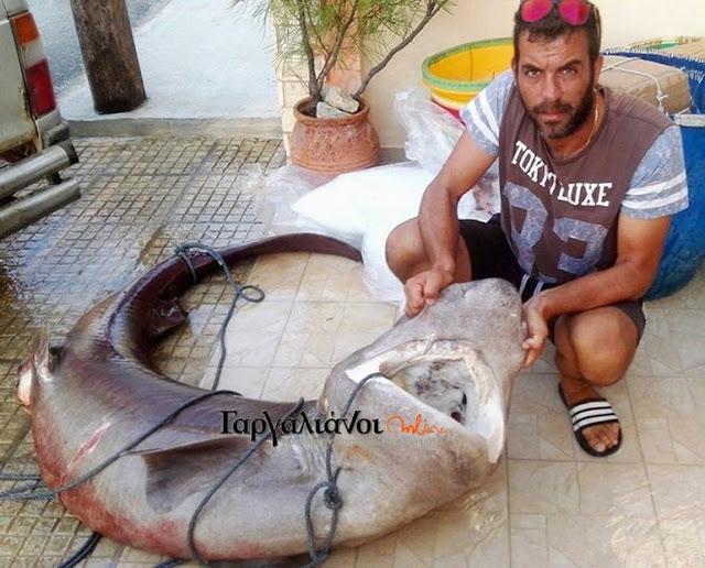 Έπιασαν καρχαρία 180 κιλών!