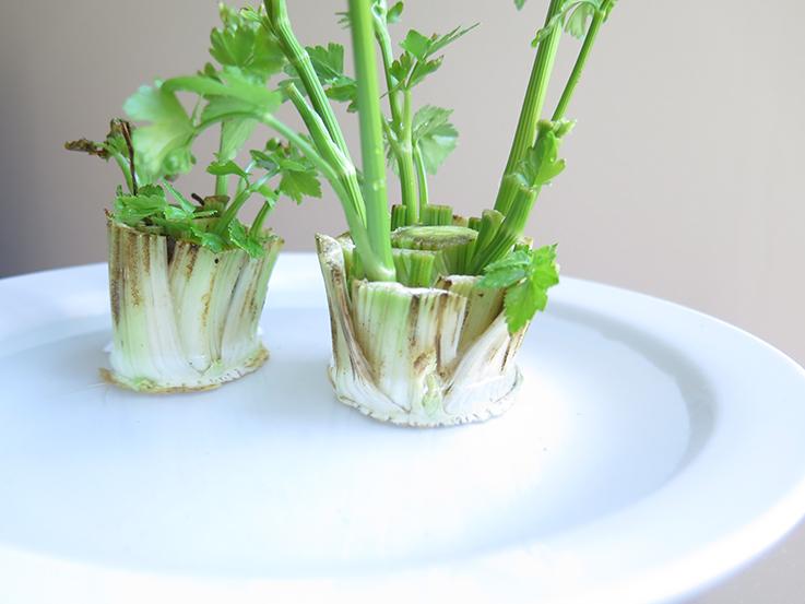 Regrowing vegetables in water