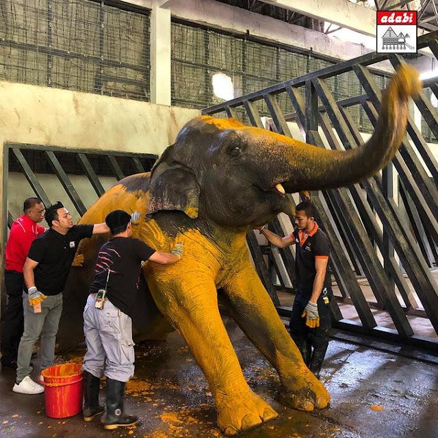 gajah bersama serbuk kunyit