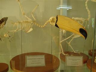 Museu Municipal de História Natural