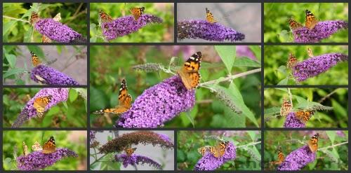 Sandra S Ark I Love Butterflies A Dose Of Encouragement