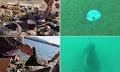 Κορινθία: Ανέλκυσαν 66 κιλά ανθρώπινης ρύπανσης από τον βυθό της παραλίας Καλαμακίου στα Ίσθμια (φώτο)
