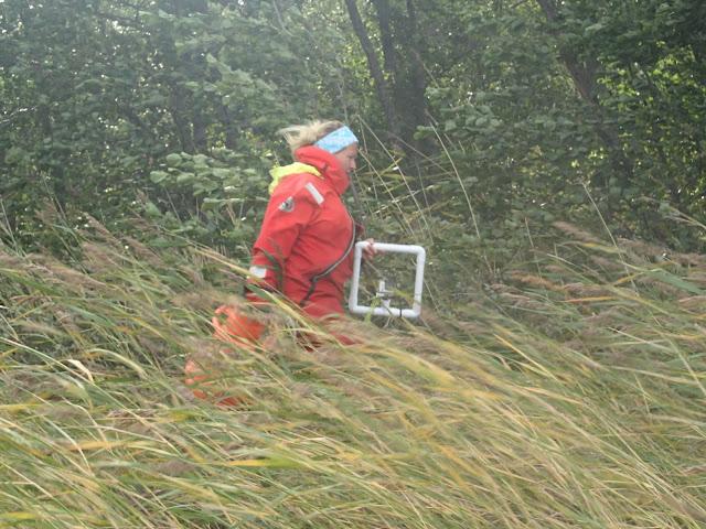 Pelastautumispukuinen henkilö tarpoo kovassa tuulessa järviruovikossa