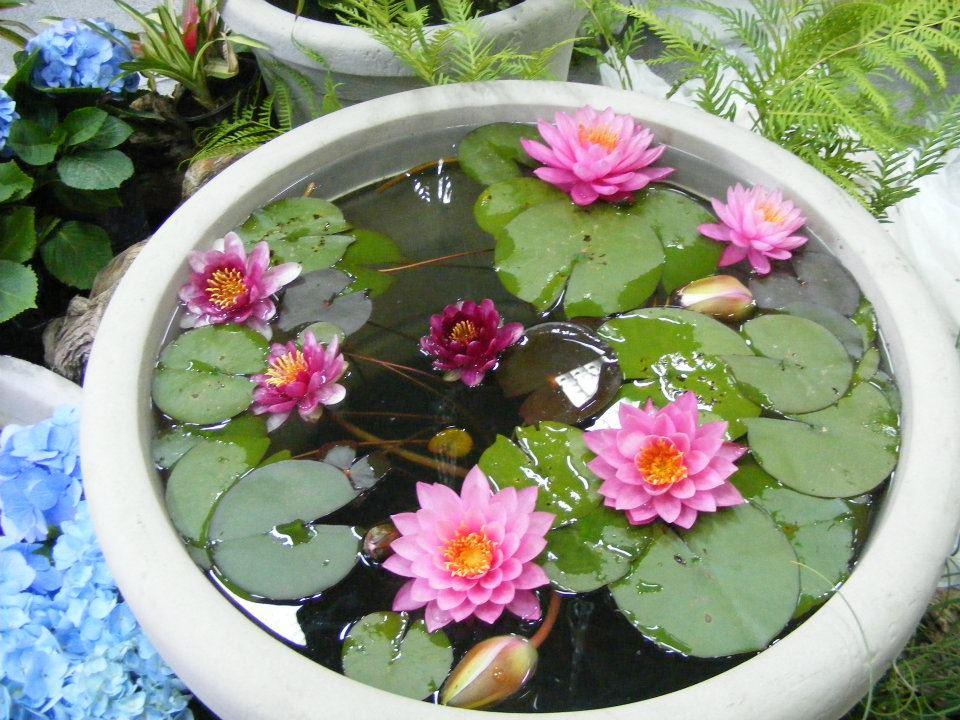 Todas somos reinas proyecto mini mini estanque - Estanques en el jardin ...
