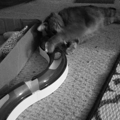 Molly playing with Catit toy