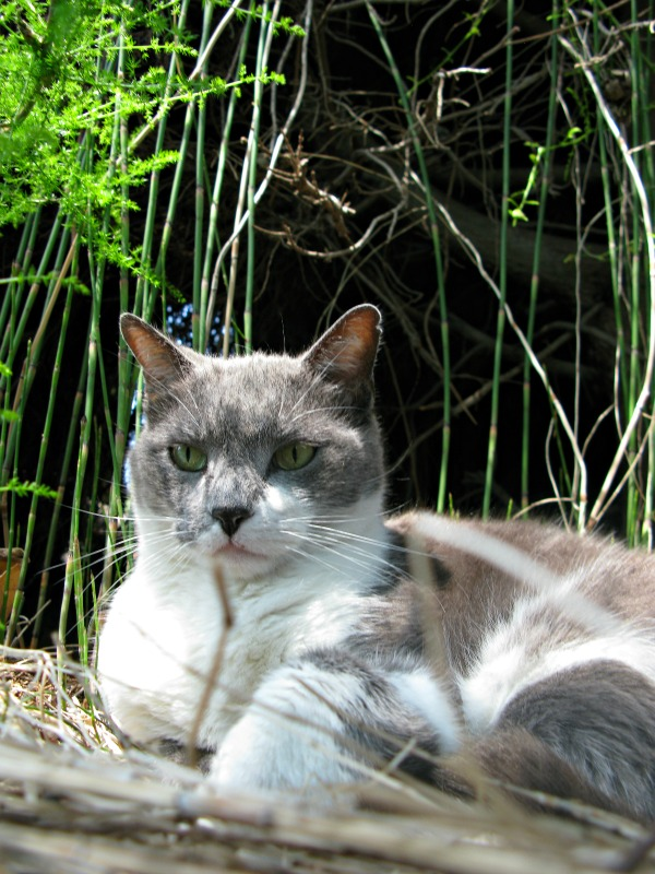 cat of le cannet france