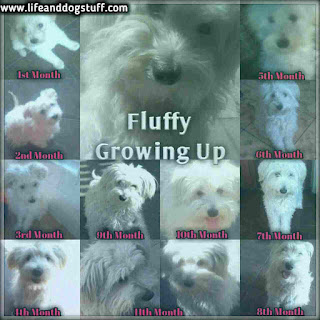 Fluffy the puppy growing up time line.