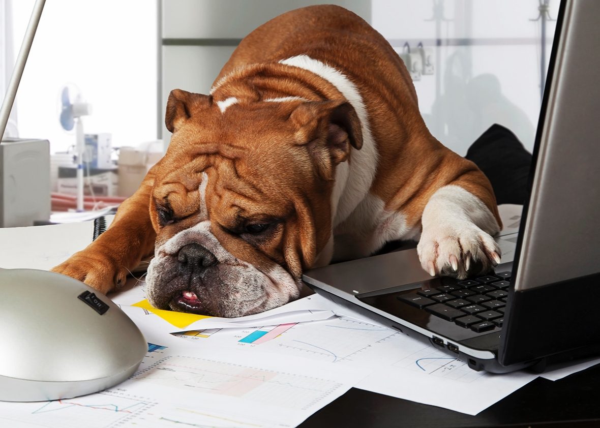 National Bring Your Dog To Work Day Uk