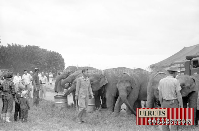 les éléphants du Cirque Ringling Bros and Barnum & Bailey circus 1950