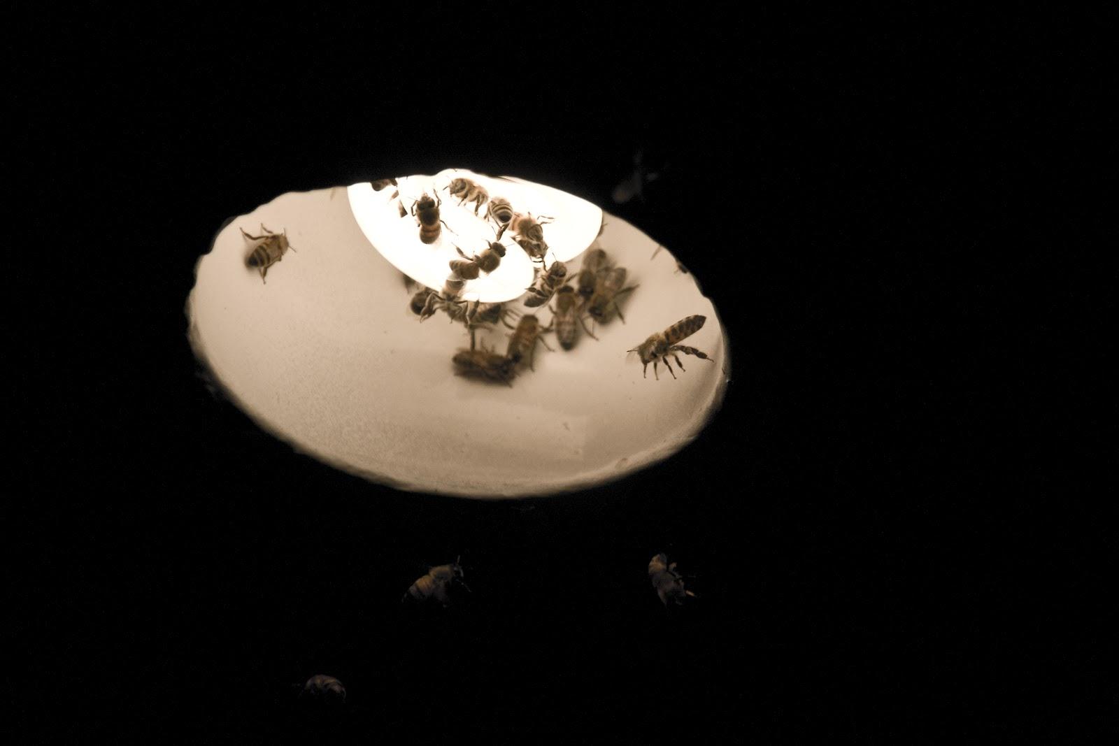 Lighting a Bee's Nest on Fire | Surf Micke