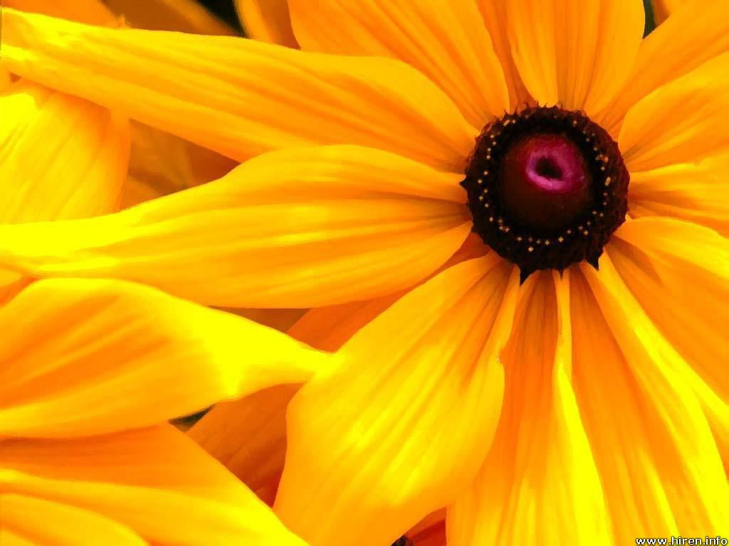 yellow flower backgrounds - photo #3