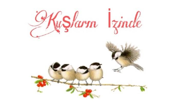 Blog Tanıtımı: Kuşların İzinde