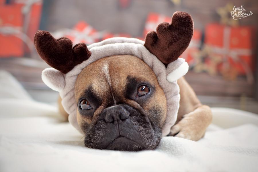 Weihnachten Xmas Französische Bulldogge Bully Frenchy Christmas Merry Christmas Fröhliche Weihnachten karte Grüße Hund
