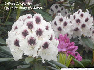 Image of white and purple rhododendrons flowers in full bloom with text: A fresh perspective opens an array of choices