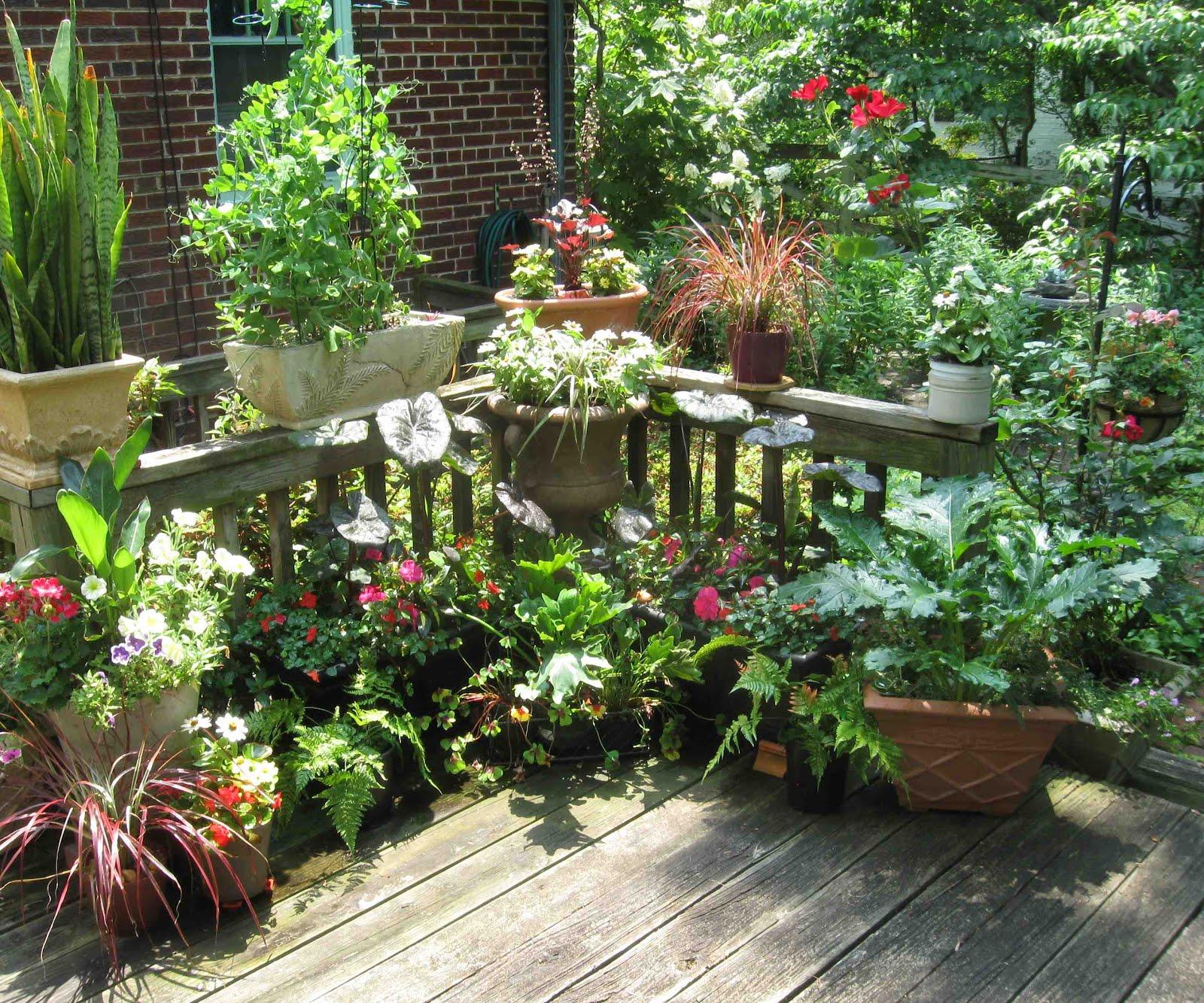 randuwa: The Madness, No The Joy Of Container Gardening on Gardening  id=63990