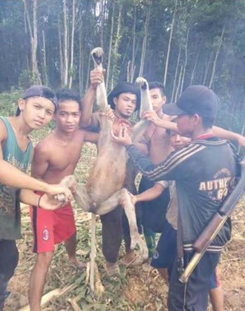 Bangga Pamer Hasil Berburu Hewan Langka 6 Pemuda Kini Jadi Buronan Polisi