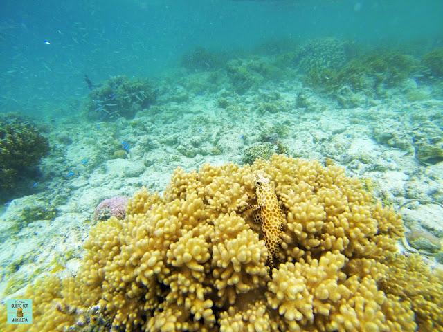 Isla de Kapalai, Borneo (Malasia)