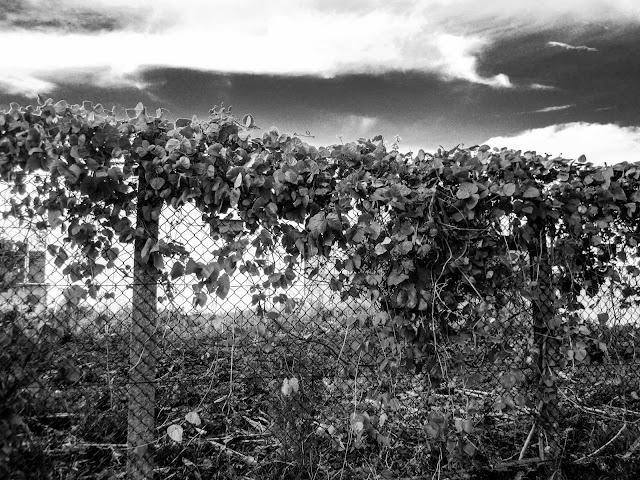 A cerca