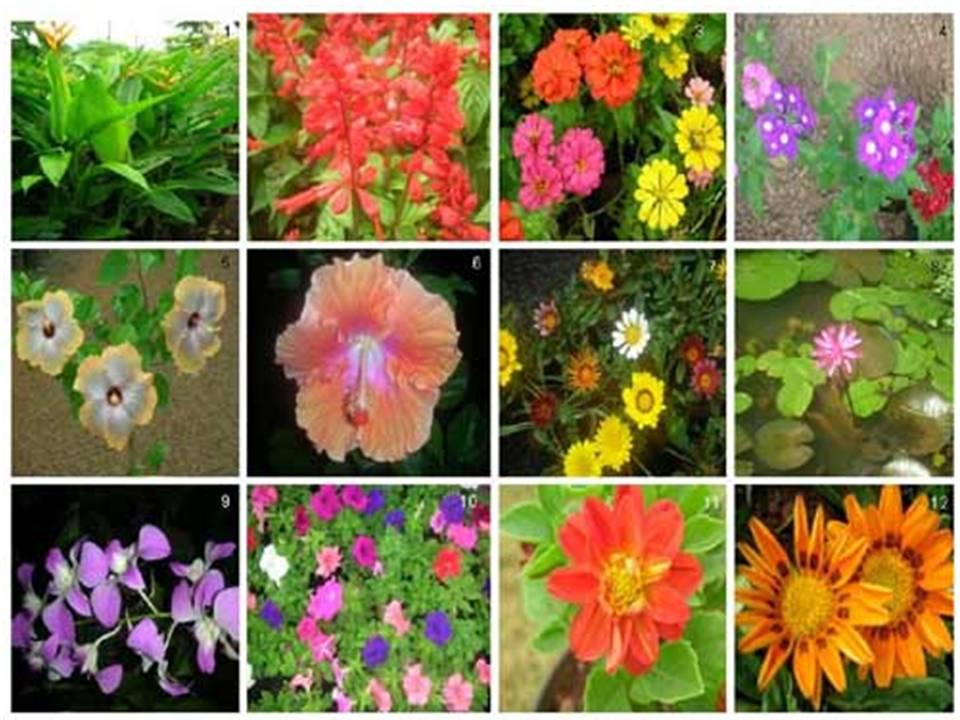 La jardineria un momento de relajaci n plantas ornamentales for Concepto de plantas ornamentales