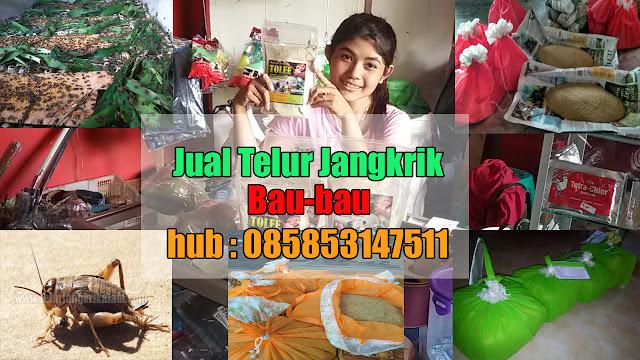 Jual Telur Jangkrik Kota Bau-Bau Hubungi 085853147511