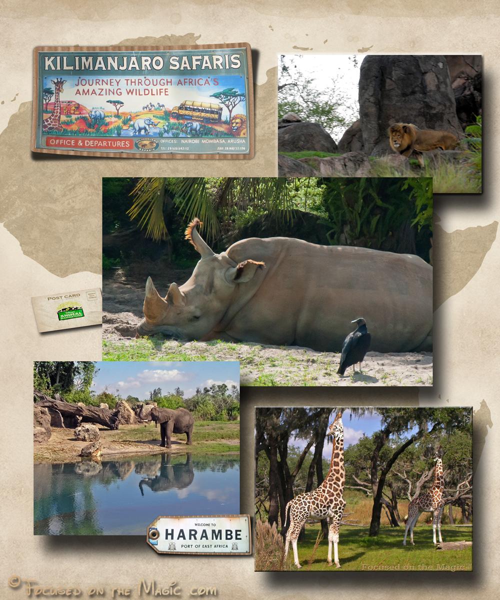 Kilimanjaro Safaris, Animal Kingdom