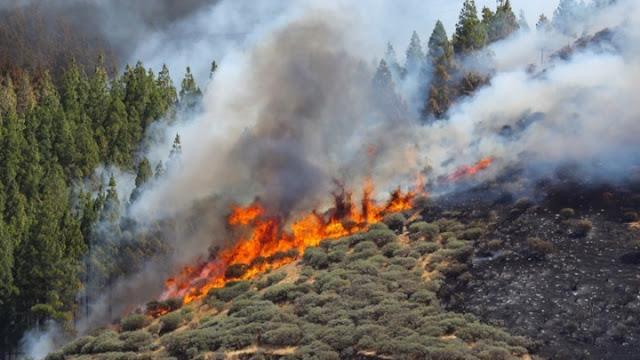 Λαϊκή Συσπείρωση:  Η Πελοπόννησος και φέτος ανοχύρωτη μπροστά στον κίνδυνο δασικών πυρκαγιών!