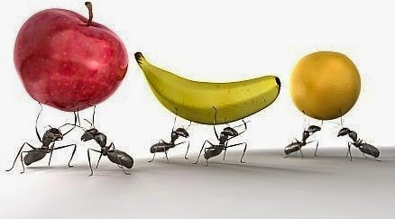 Hasil gambar untuk Semut dapat mengangkat Beban 50 kali