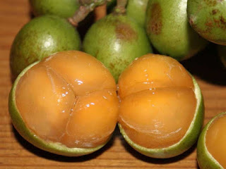 Mamoncillo Fruit pictures