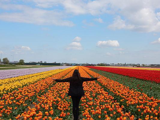 dicas viagem jardim tulipas