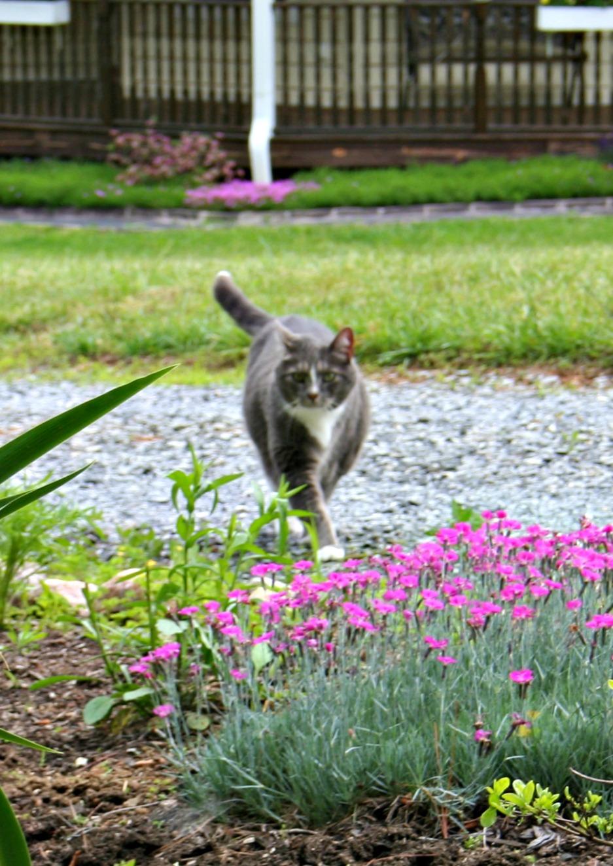 BIRD HOUSES OUTDOOR CAT BIRDHOUSE POUNCING CALICO CAT BIRD HOUSE GARDEN