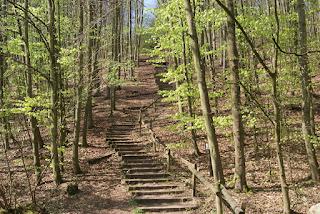 Eine Treppe aus Holzbohlen schlängelt sich einen Berg hinauf. Rechts und links wachsen Bäume.