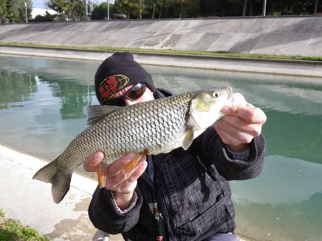streetfishing montpellier chub