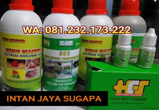 Jual SOC HCS, KINGMASTER, BIOPOWER Siap Kirim Intan Jaya Sugapa