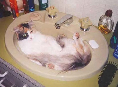 23 Cute Cats In Sinks 23 Pics Amazing Creatures