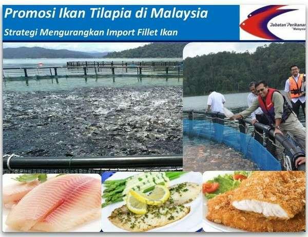 Viral: Ikan Tilapia Malaysia Selamat Dimakan - Jabatan Perikanan