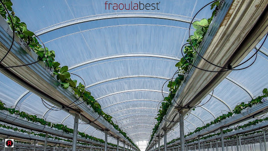 Location - Planting Season | FraoulaBest© System (Hydroponic Strawberry)