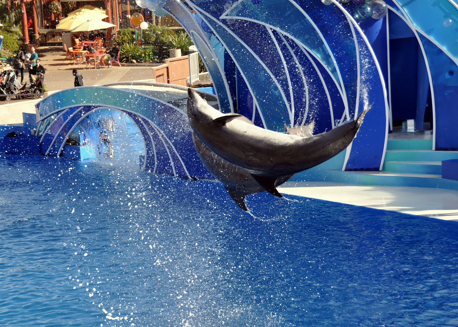 Incidents At Seaworld Parks: Veater Family: Travel Tips And Tricks: Navigating Sea