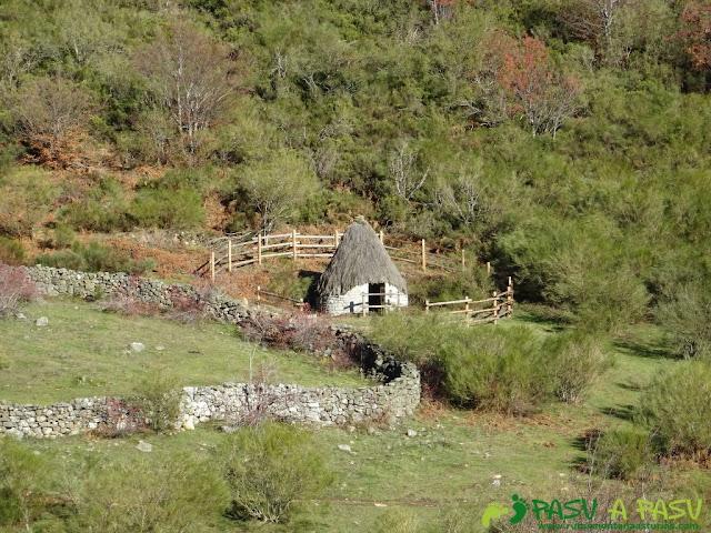 Teito en el Valle Pinzón
