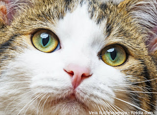 Sometimes cats speak with their eyes. Look into your cats eyes and see what she has to say.